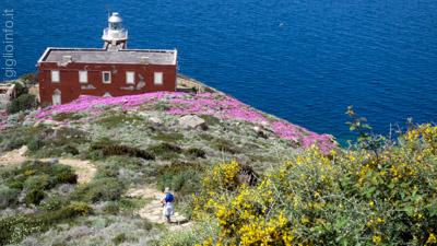 Faro del Fenaio Isola del Giglio