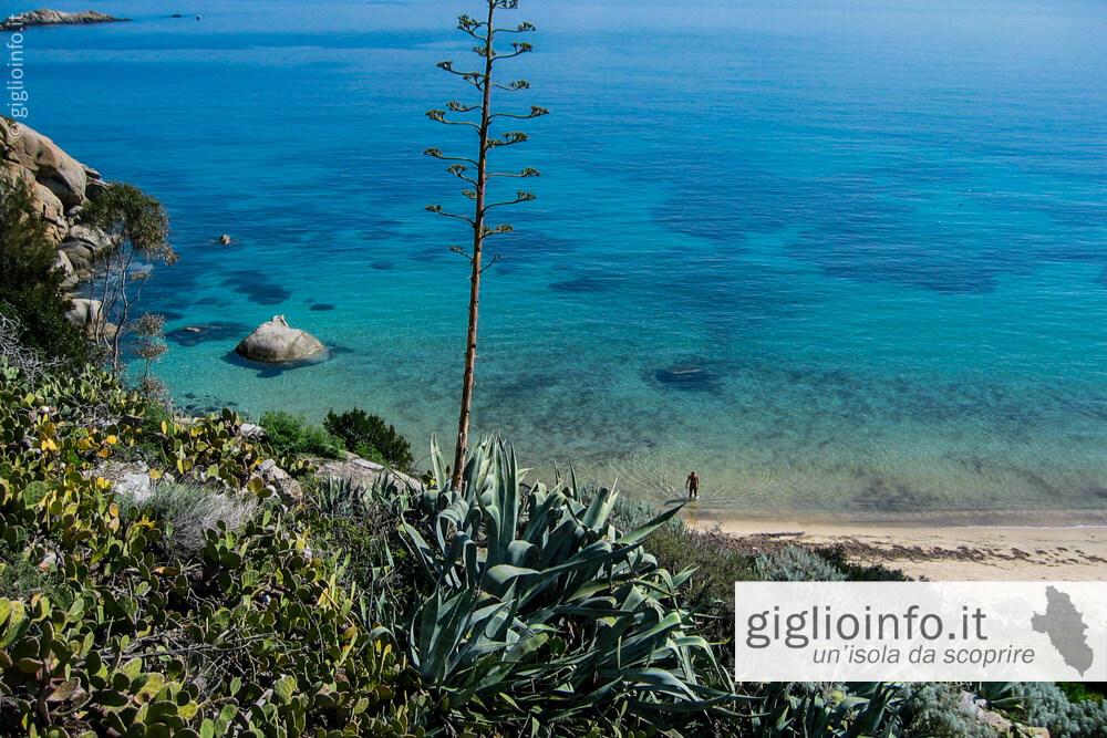Spiaggia delle Cannelle, Isola del Giglio